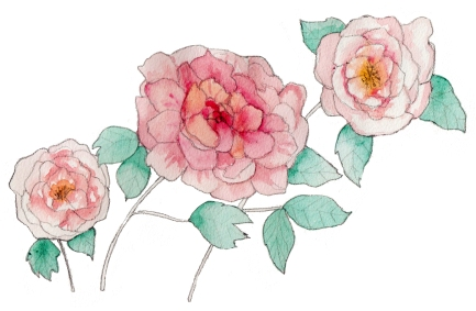 Peony for Chinese Medical Practice